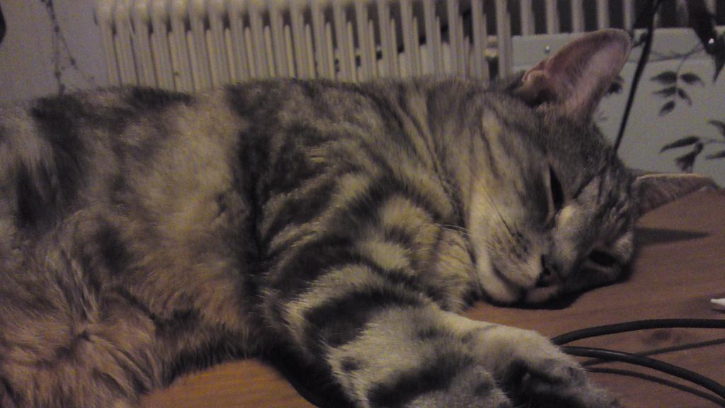 Tisdag Katt