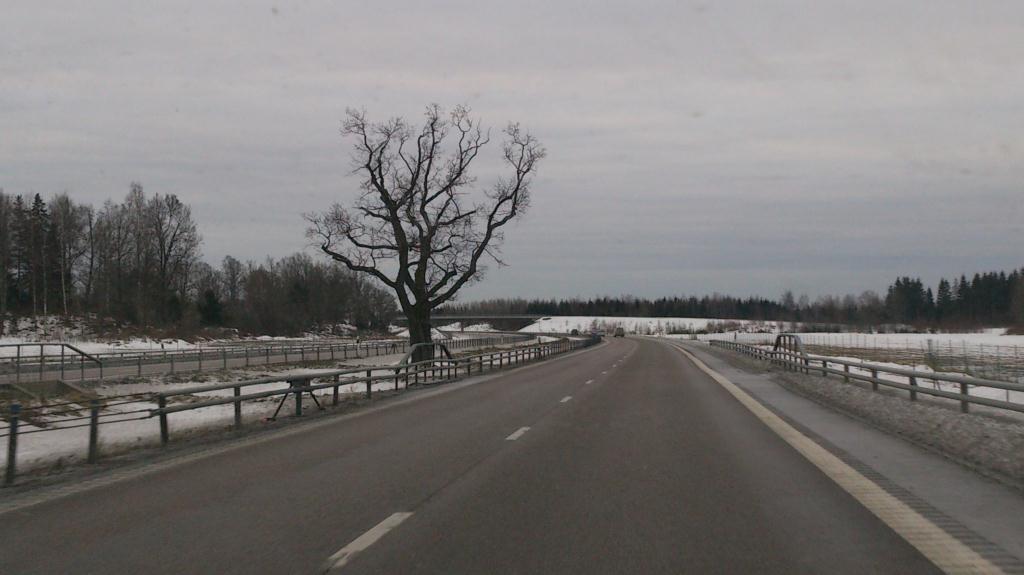 Trädet på E4 söder om Tierp